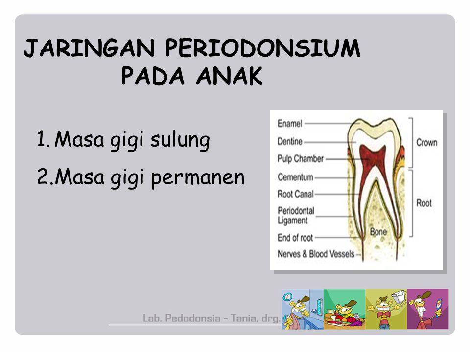 JARINGAN PERIODONSIUM PADA ANAK 1.Masa gigi sulung 2.Masa gigi permanen