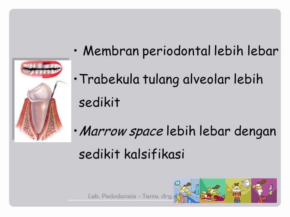 Membran periodontal lebih lebar Trabekula tulang alveolar lebih sedikit Marrow space lebih lebar dengan sedikit kalsifikasi