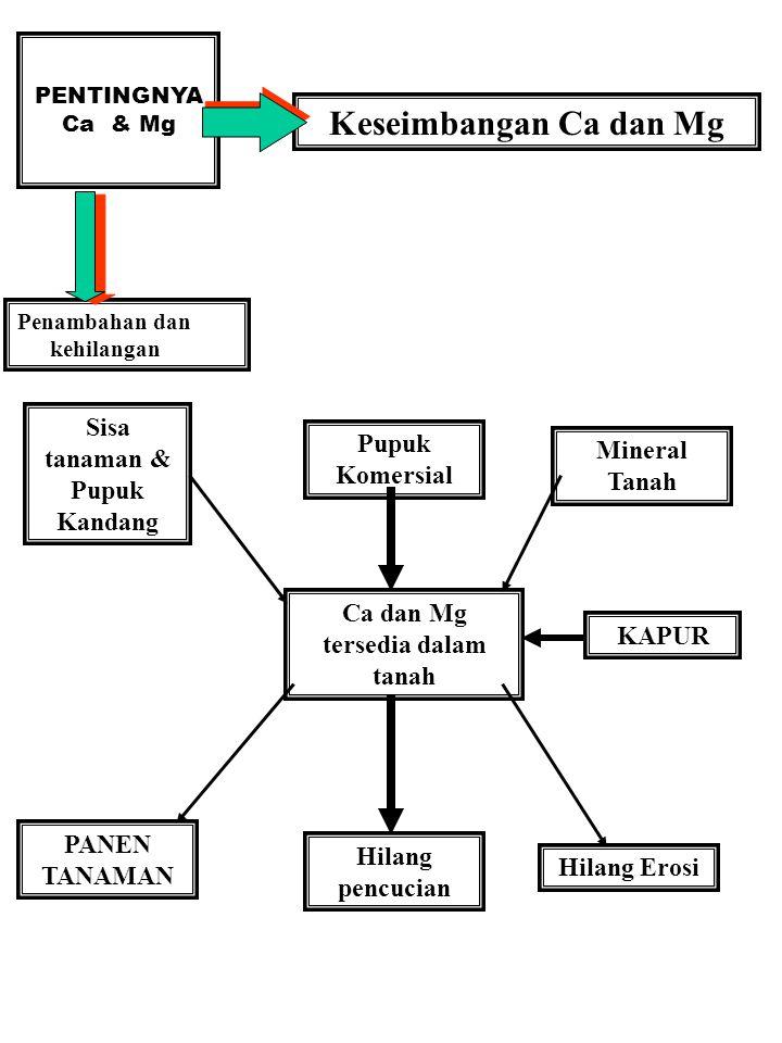 PENTINGNYA Ca & Mg Keseimbangan Ca dan Mg Penambahan dan kehilangan Ca dan Mg tersedia dalam tanah Sisa tanaman & Pupuk Kandang Pupuk Komersial Minera