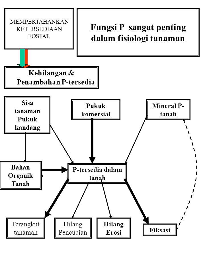 MEMPERTAHANKAN KETERSEDIAAN FOSFAT. Fungsi P sangat penting dalam fisiologi tanaman Kehilangan & Penambahan P-tersedia P-tersedia dalam tanah Sisa tan