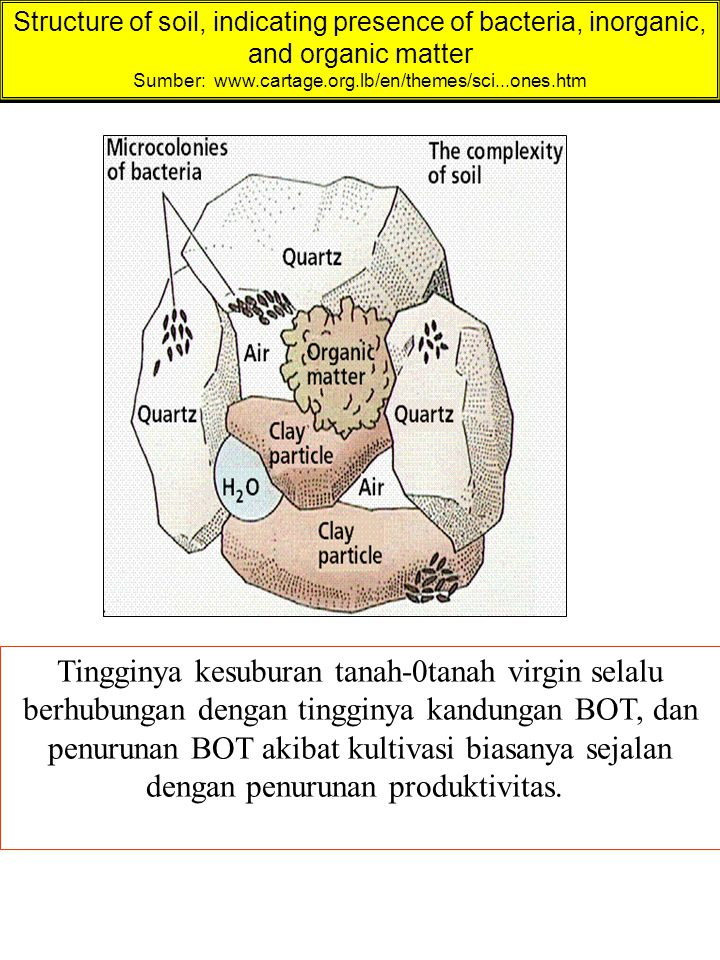 Structure of soil, indicating presence of bacteria, inorganic, and organic matter Sumber: www.cartage.org.lb/en/themes/sci...ones.htm Tingginya kesubu