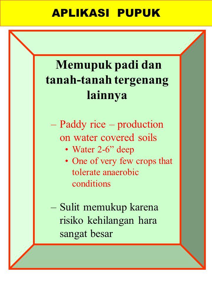 Memupuk padi dan tanah-tanah tergenang lainnya –Paddy rice – production on water covered soils Water 2-6 deep One of very few crops that tolerate anaerobic conditions –Sulit memukup karena risiko kehilangan hara sangat besar APLIKASI PUPUK