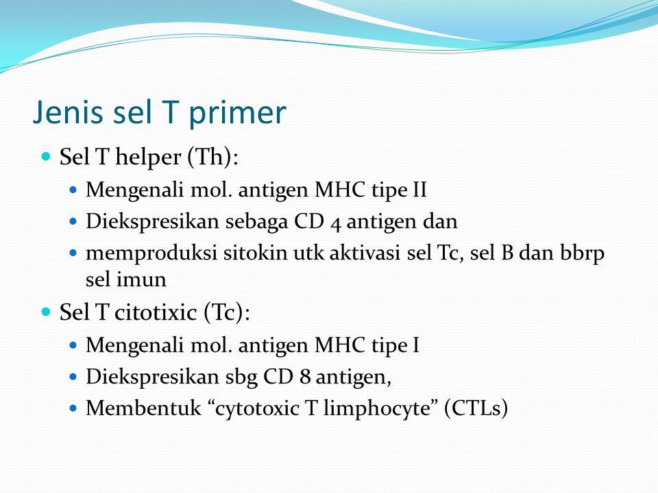 Jenis sel T primer Sel T helper (Th): Mengenali mol. antigen MHC tipe II Diekspresikan sebaga CD 4 antigen dan memproduksi sitokin utk aktivasi sel Tc