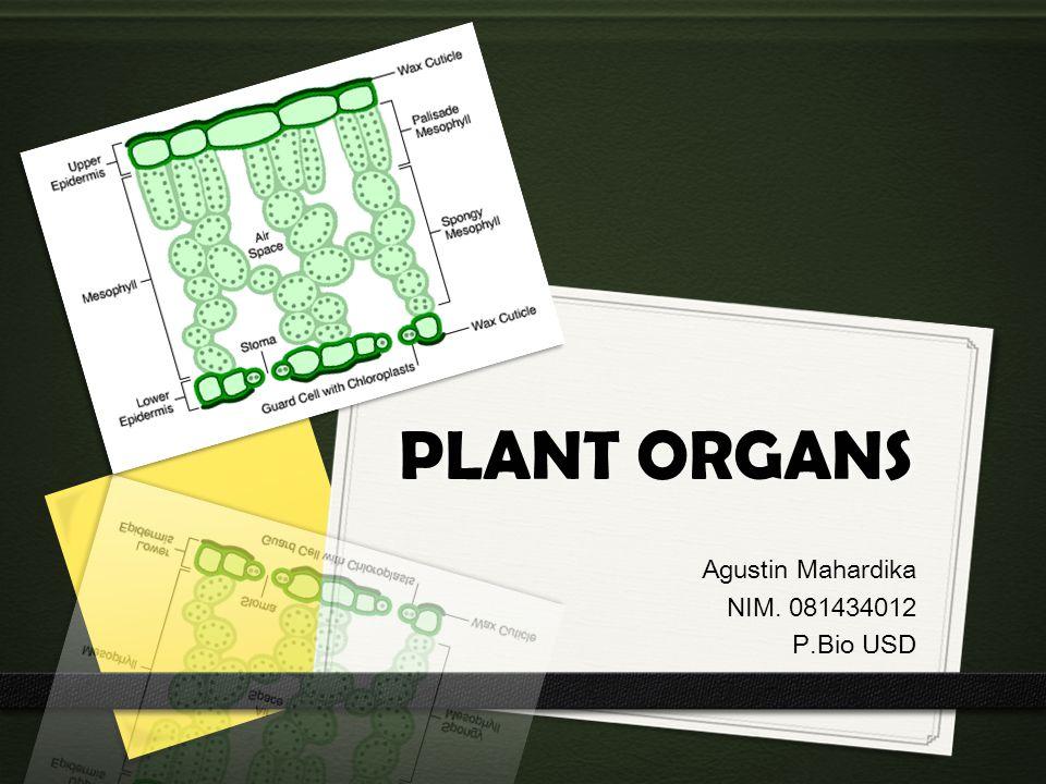 PLANT ORGANS Agustin Mahardika NIM. 081434012 P.Bio USD
