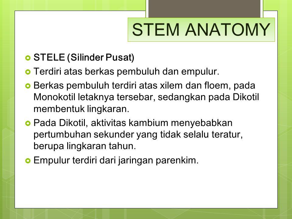 STEM ANATOMY  STELE (Silinder Pusat)  Terdiri atas berkas pembuluh dan empulur.  Berkas pembuluh terdiri atas xilem dan floem, pada Monokotil letak