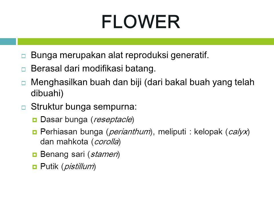 FLOWER  Bunga merupakan alat reproduksi generatif.  Berasal dari modifikasi batang.  Menghasilkan buah dan biji (dari bakal buah yang telah dibuahi