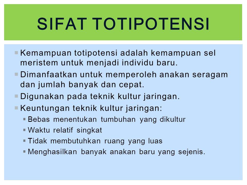  Kemampuan totipotensi adalah kemampuan sel meristem untuk menjadi individu baru.  Dimanfaatkan untuk memperoleh anakan seragam dan jumlah banyak da