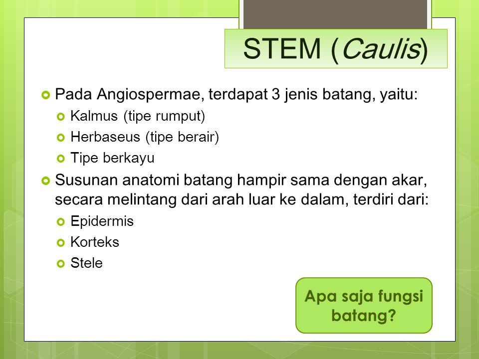 STEM (Caulis)  Pada Angiospermae, terdapat 3 jenis batang, yaitu:  Kalmus (tipe rumput)  Herbaseus (tipe berair)  Tipe berkayu  Susunan anatomi b