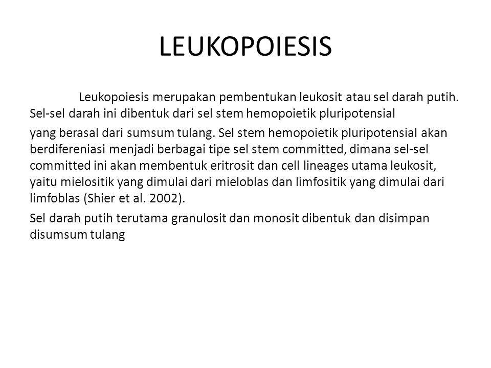 Leukopoiesis merupakan pembentukan leukosit atau sel darah putih.