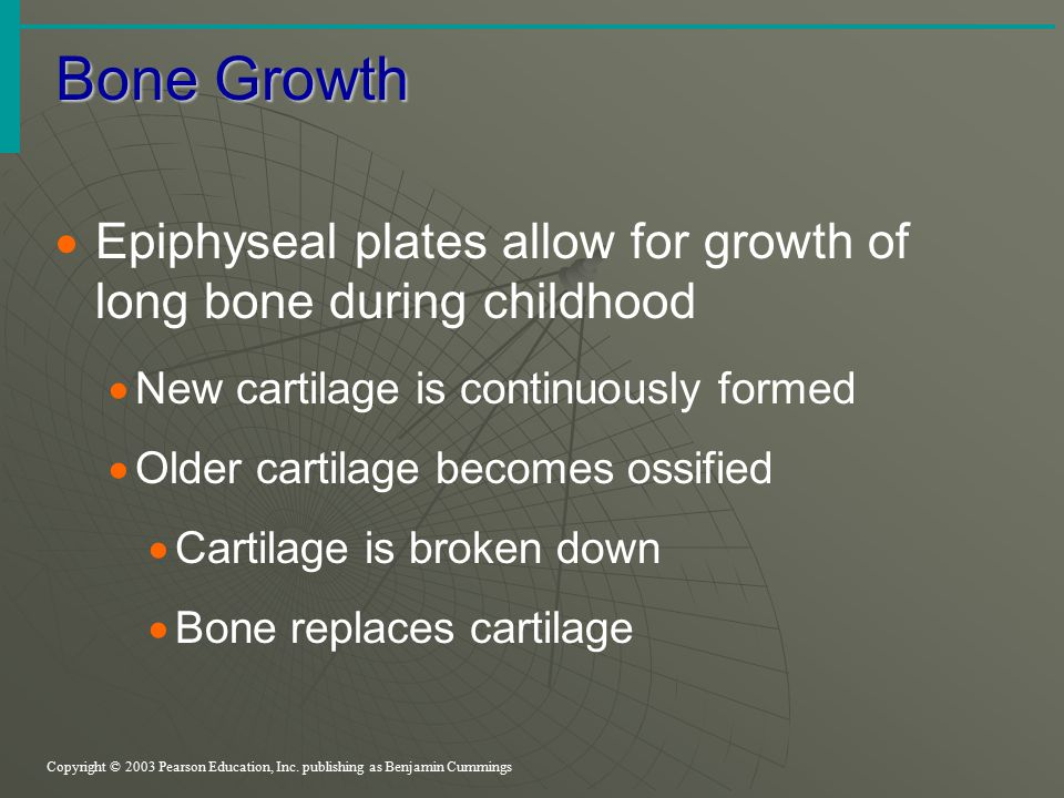 Bone Growth Copyright © 2003 Pearson Education, Inc. publishing as Benjamin Cummings  Epiphyseal plates allow for growth of long bone during childhoo