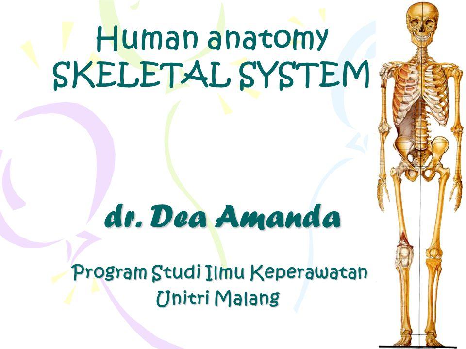 dr. Dea Amanda dr. Dea Amanda Program Studi Ilmu Keperawatan Program Studi Ilmu Keperawatan Unitri Malang Human anatomy SKELETAL SYSTEM