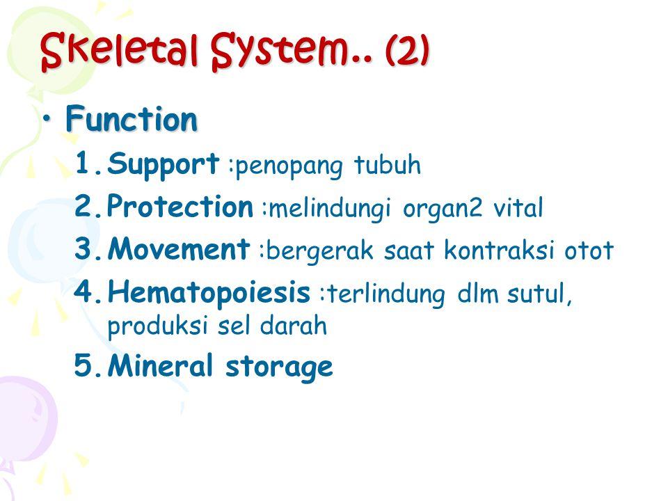 Skeletal System.. (2) FunctionFunction 1.Support :penopang tubuh 2.Protection :melindungi organ2 vital 3.Movement :bergerak saat kontraksi otot 4.Hema