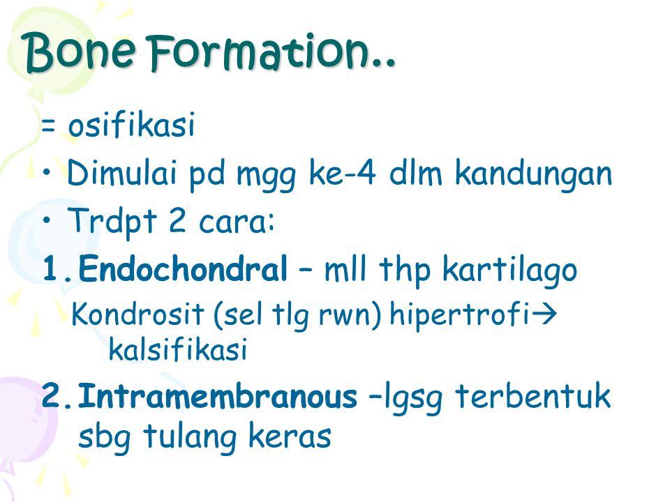 Bone Formation.. = osifikasi Dimulai pd mgg ke-4 dlm kandungan Trdpt 2 cara: 1.Endochondral – mll thp kartilago Kondrosit (sel tlg rwn) hipertrofi  k
