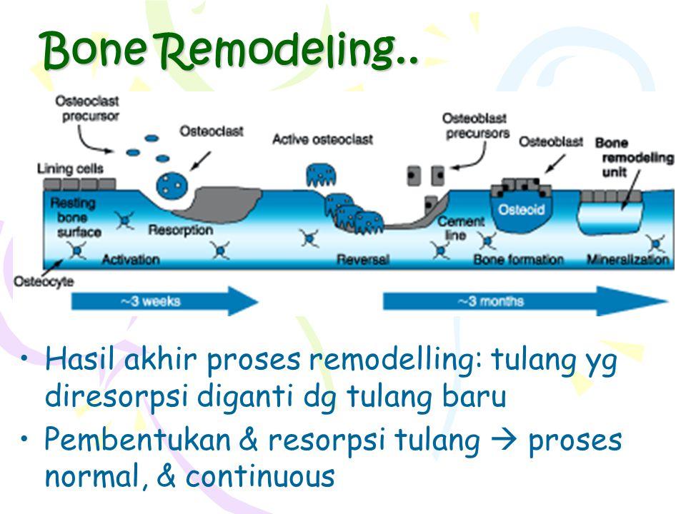 Bone Remodeling.. Hasil akhir proses remodelling: tulang yg diresorpsi diganti dg tulang baru Pembentukan & resorpsi tulang  proses normal, & continu