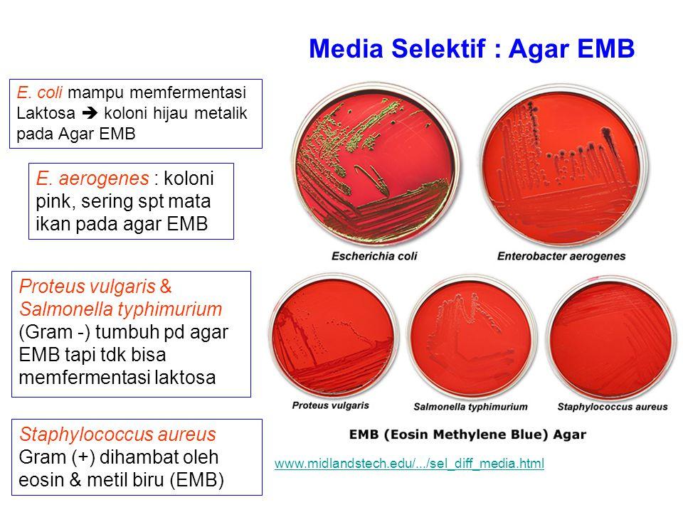 Media Selektif : Agar EMB E. coli mampu memfermentasi Laktosa  koloni hijau metalik pada Agar EMB E. aerogenes : koloni pink, sering spt mata ikan pa