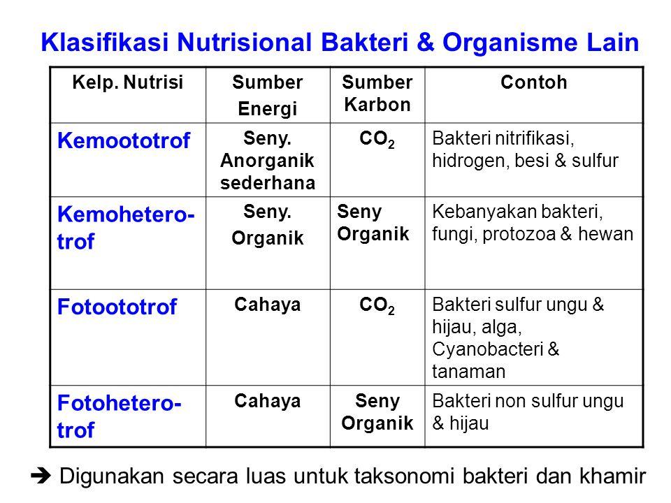 Kelp. NutrisiSumber Energi Sumber Karbon Contoh Kemoototrof Seny. Anorganik sederhana CO 2 Bakteri nitrifikasi, hidrogen, besi & sulfur Kemohetero- tr