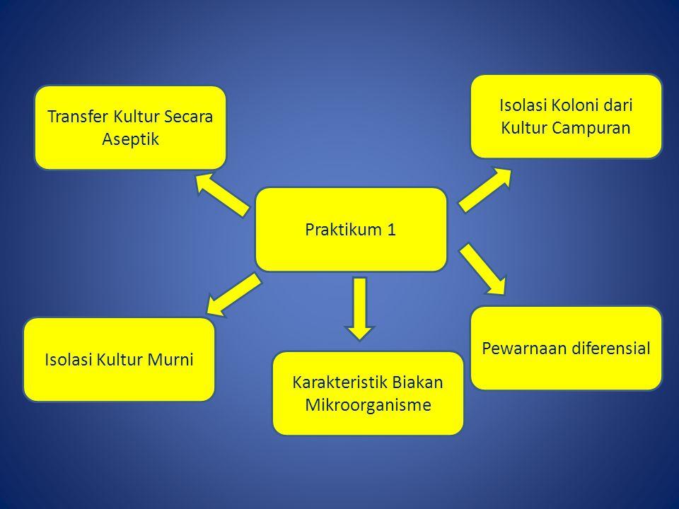 Praktikum 1 Isolasi Koloni dari Kultur Campuran Transfer Kultur Secara Aseptik Karakteristik Biakan Mikroorganisme Isolasi Kultur Murni Pewarnaan diferensial