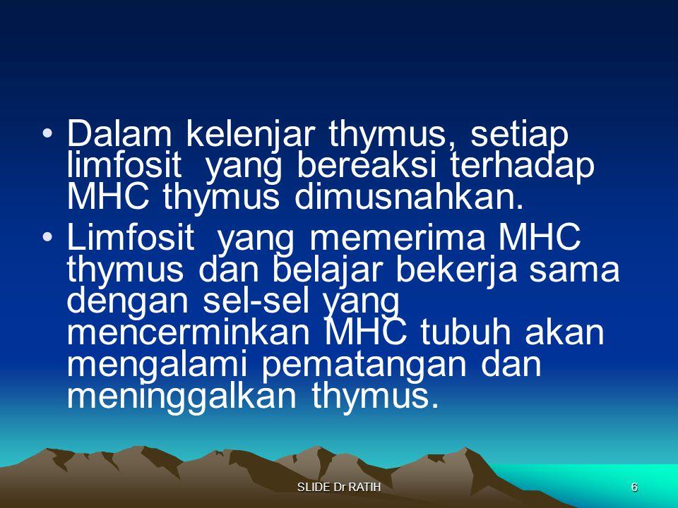 SLIDE Dr RATIH6 Dalam kelenjar thymus, setiap limfosit yang bereaksi terhadap MHC thymus dimusnahkan. Limfosit yang memerima MHC thymus dan belajar be