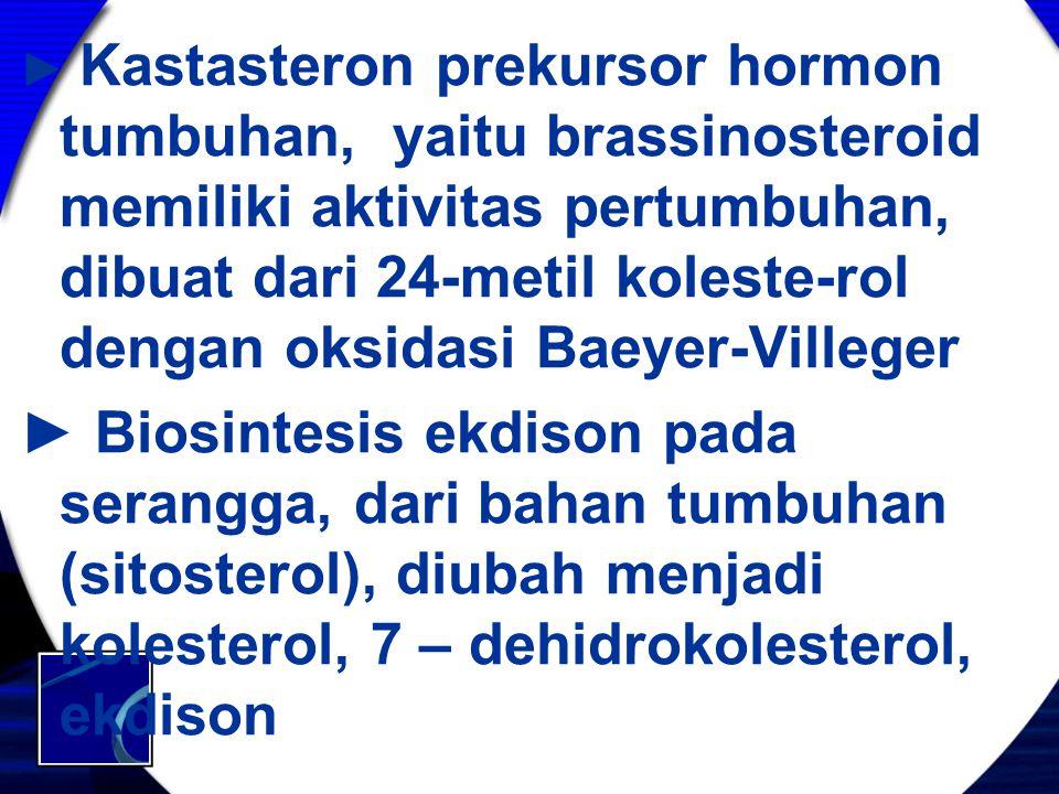 ► Kastasteron prekursor hormon tumbuhan, yaitu brassinosteroid memiliki aktivitas pertumbuhan, dibuat dari 24-metil koleste-rol dengan oksidasi Baeyer