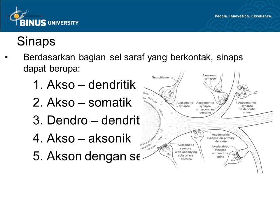 Sinaps Berdasarkan bagian sel saraf yang berkontak, sinaps dapat berupa:  Akso – dendritik  Akso – somatik  Dendro – dendritik  Akso – aksonik