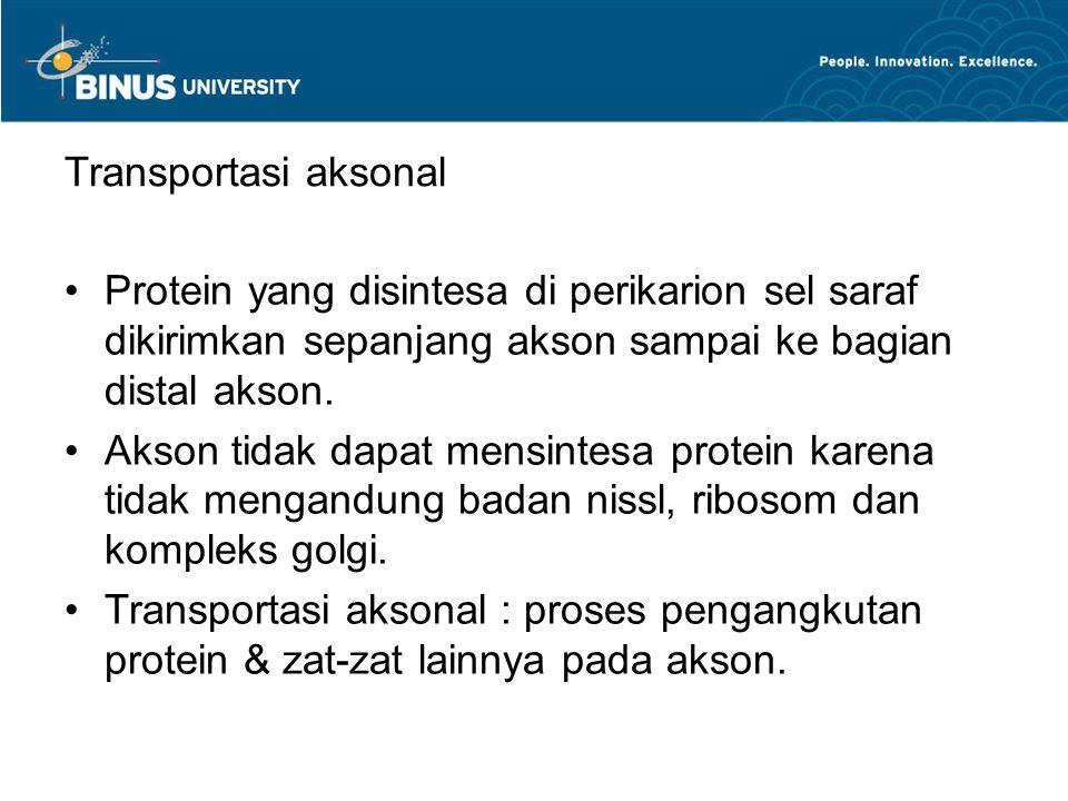 Transportasi aksonal Protein yang disintesa di perikarion sel saraf dikirimkan sepanjang akson sampai ke bagian distal akson. Akson tidak dapat mensin