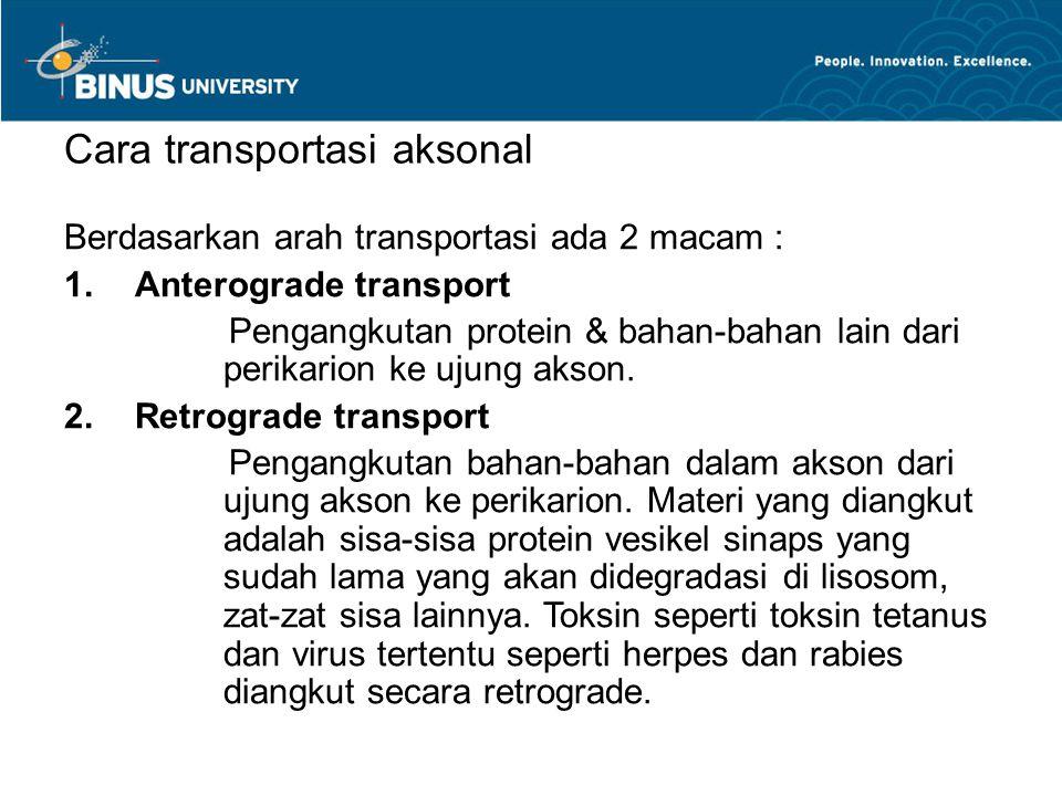 Cara transportasi aksonal Berdasarkan arah transportasi ada 2 macam :  Anterograde transport Pengangkutan protein & bahan-bahan lain dari perikarion