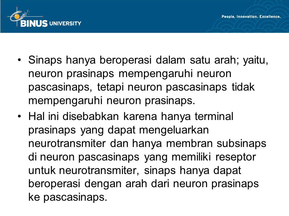 Sinaps hanya beroperasi dalam satu arah; yaitu, neuron prasinaps mempengaruhi neuron pascasinaps, tetapi neuron pascasinaps tidak mempengaruhi neuron