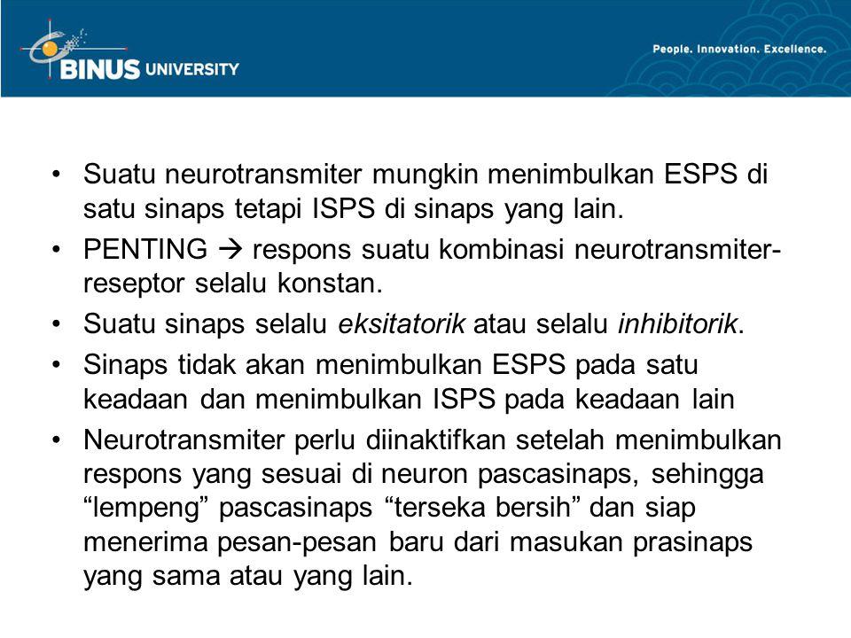 Suatu neurotransmiter mungkin menimbulkan ESPS di satu sinaps tetapi ISPS di sinaps yang lain. PENTING  respons suatu kombinasi neurotransmiter- rese