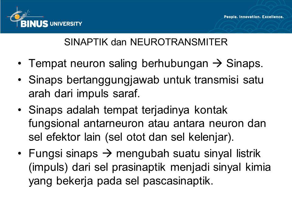 Tempat neuron saling berhubungan  Sinaps. Sinaps bertanggungjawab untuk transmisi satu arah dari impuls saraf. Sinaps adalah tempat terjadinya kontak