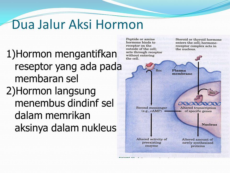 Dua Jalur Aksi Hormon 1)Hormon mengantifkan reseptor yang ada pada membaran sel 2)Hormon langsung menembus dindinf sel dalam memrikan aksinya dalam nukleus