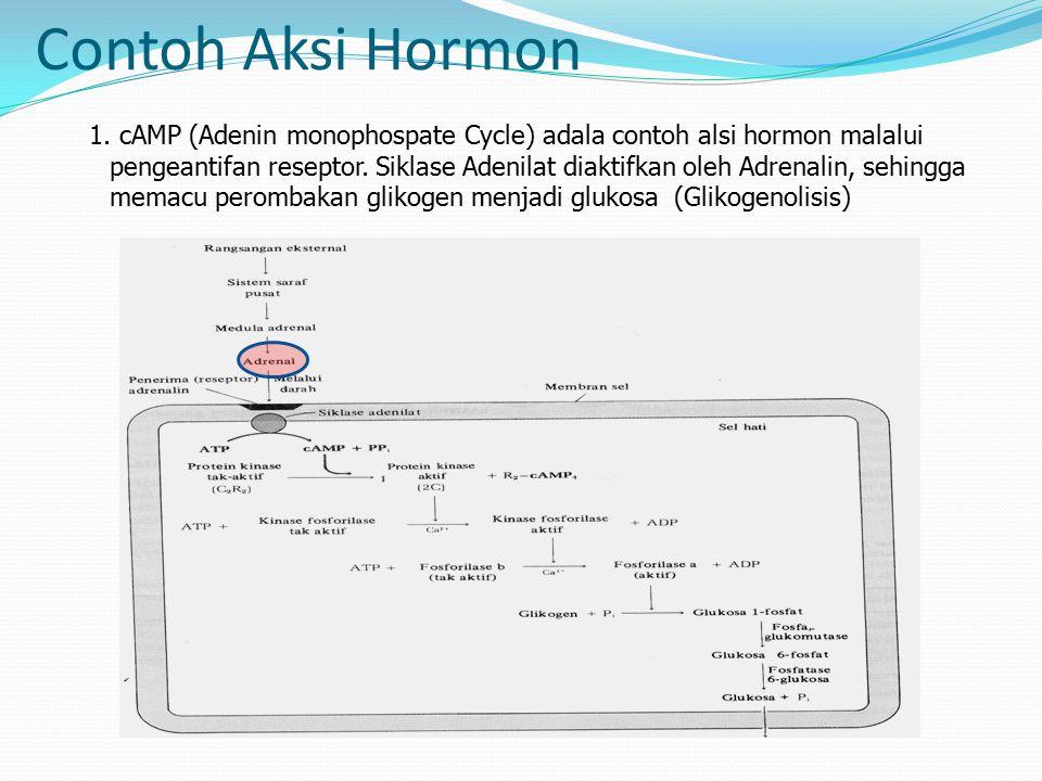 Contoh Aksi Hormon 1.