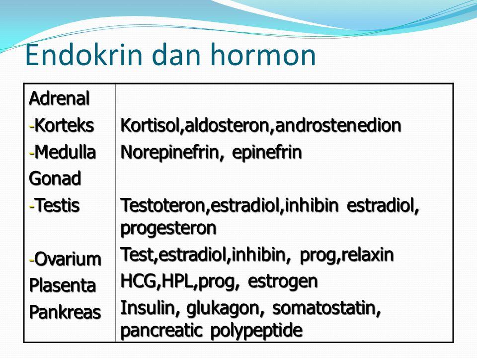 Endokrin dan hormon Adrenal - Korteks - Medulla Gonad - Testis - Ovarium PlasentaPankreasKortisol,aldosteron,androstenedion Norepinefrin, epinefrin Testoteron,estradiol,inhibin estradiol, progesteron Test,estradiol,inhibin, prog,relaxin HCG,HPL,prog, estrogen Insulin, glukagon, somatostatin, pancreatic polypeptide