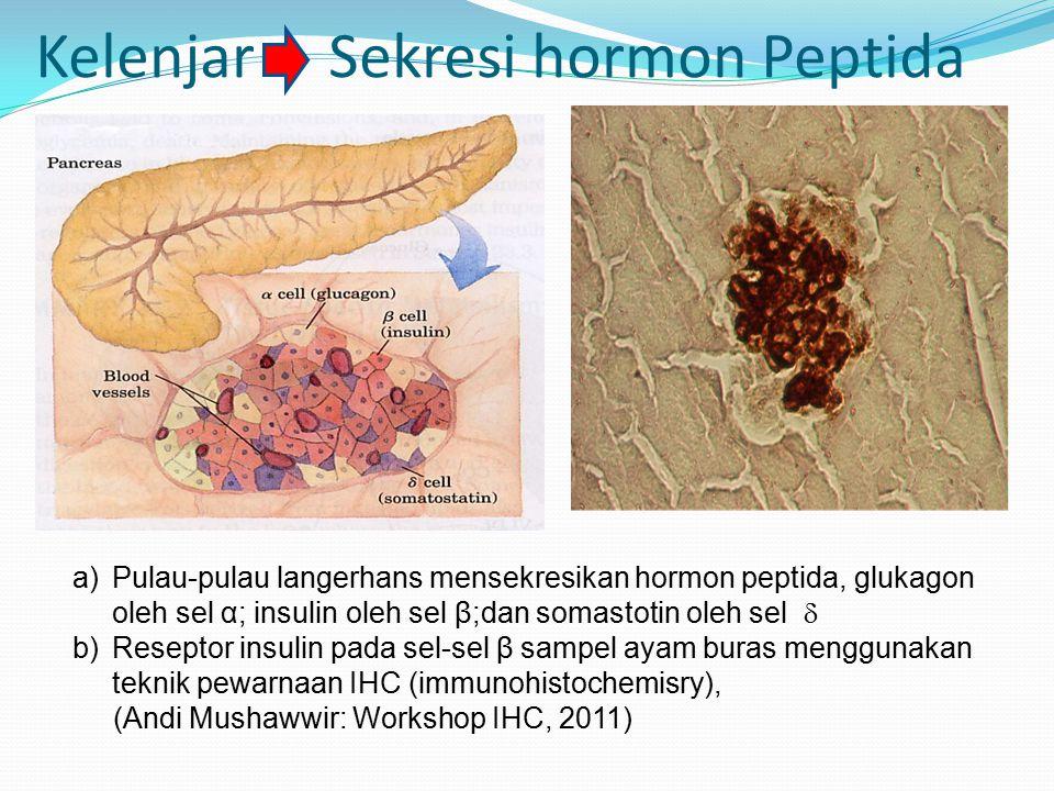 Kelenjar Sekresi hormon Peptida a)Pulau-pulau langerhans mensekresikan hormon peptida, glukagon oleh sel α; insulin oleh sel β;dan somastotin oleh sel  b)Reseptor insulin pada sel-sel β sampel ayam buras menggunakan teknik pewarnaan IHC (immunohistochemisry), (Andi Mushawwir: Workshop IHC, 2011)