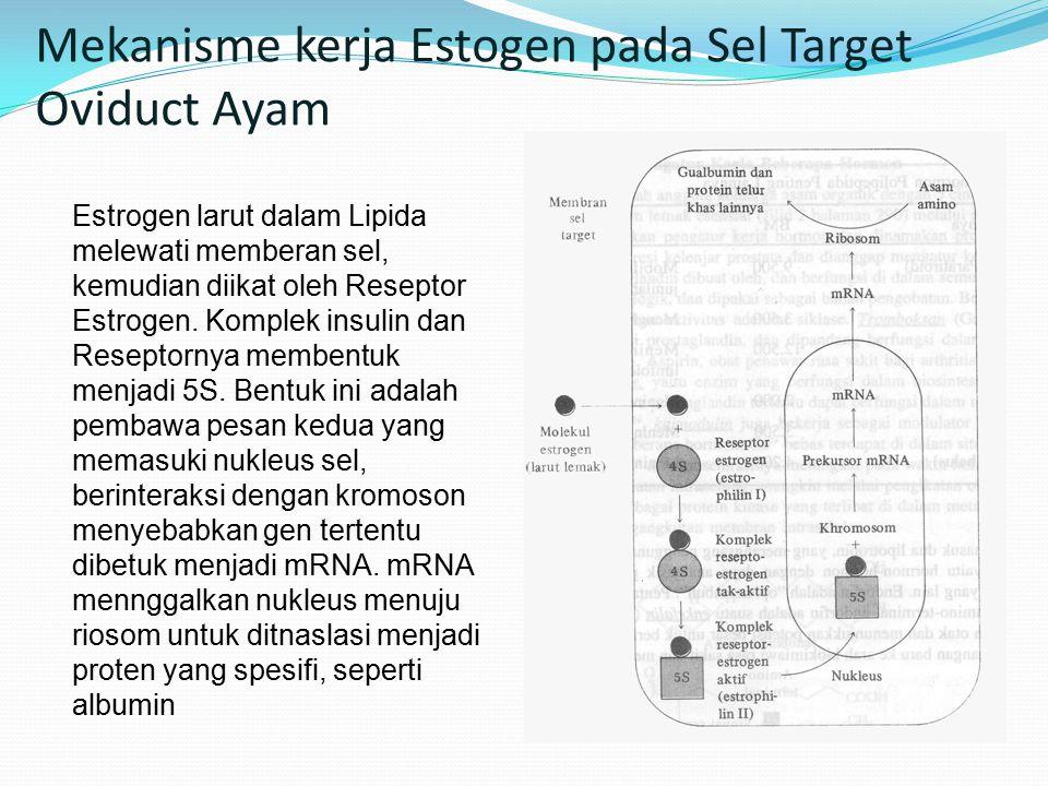 Mekanisme kerja Estogen pada Sel Target Oviduct Ayam Estrogen larut dalam Lipida melewati memberan sel, kemudian diikat oleh Reseptor Estrogen.