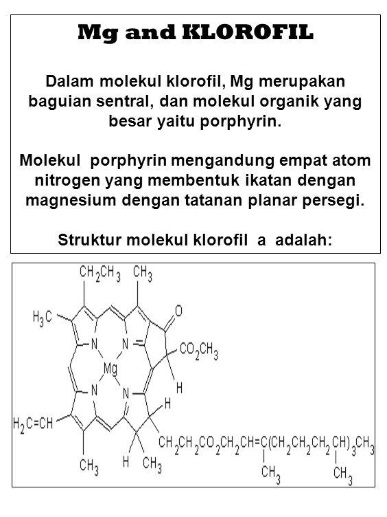Mg and KLOROFIL Dalam molekul klorofil, Mg merupakan baguian sentral, dan molekul organik yang besar yaitu porphyrin. Molekul porphyrin mengandung emp