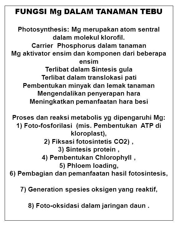 FUNGSI Mg DALAM TANAMAN TEBU Photosynthesis: Mg merupakan atom sentral dalam molekul klorofil. Carrier Phosphorus dalam tanaman Mg aktivator ensim dan