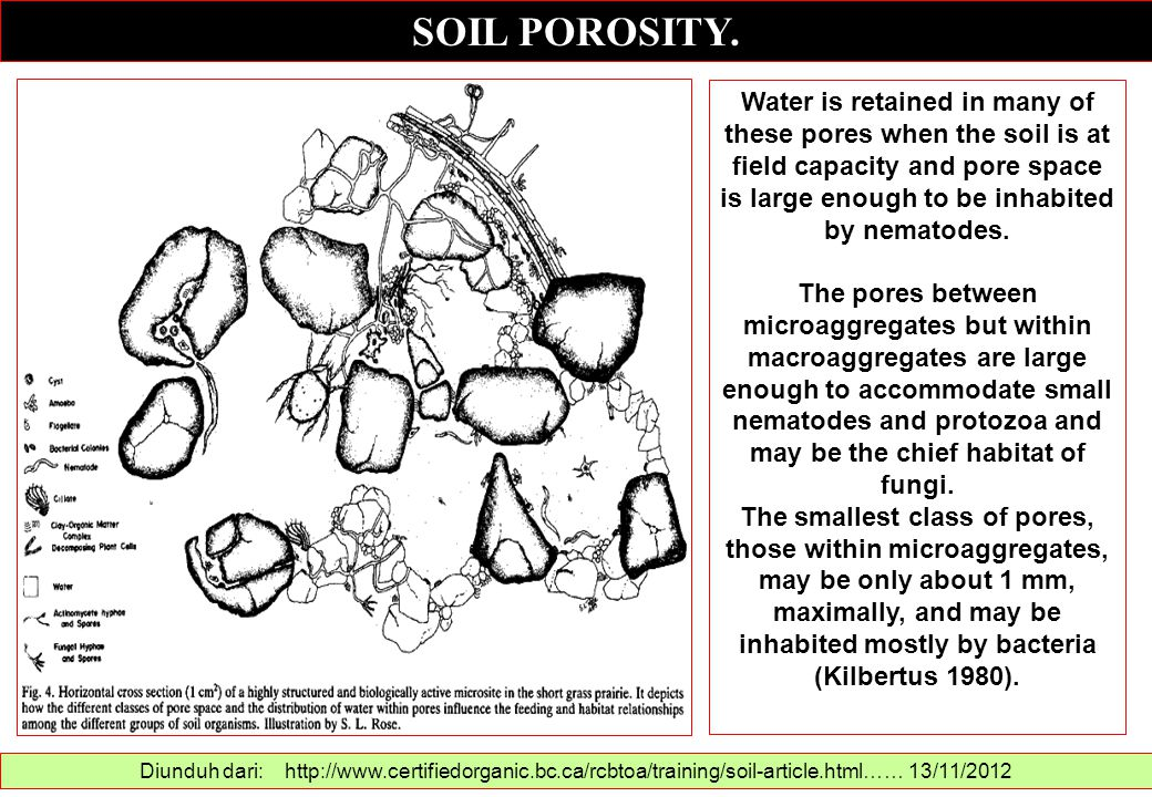 SOIL POROSITY. Diunduh dari: http://www.certifiedorganic.bc.ca/rcbtoa/training/soil-article.html…… 13/11/2012 Water is retained in many of these pores