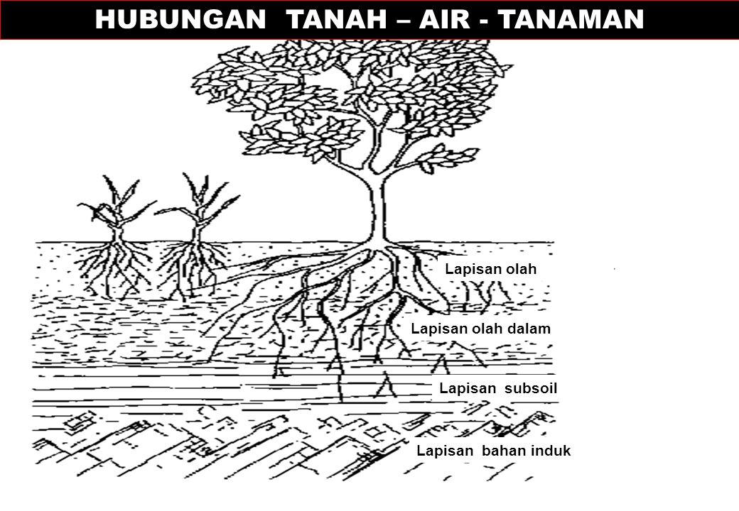 Lapisan olah Lapisan olah dalam Lapisan subsoil Lapisan bahan induk HUBUNGAN TANAH – AIR - TANAMAN