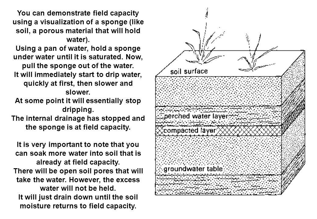 You can demonstrate field capacity using a visualization of a sponge (like soil, a porous material that will hold water). Using a pan of water, hold a