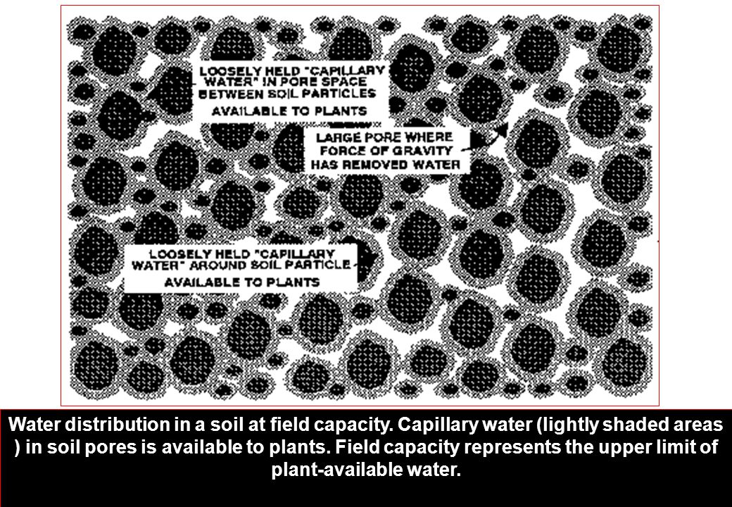 Water distribution in a soil at field capacity. Capillary water (lightly shaded areas ) in soil pores is available to plants. Field capacity represent