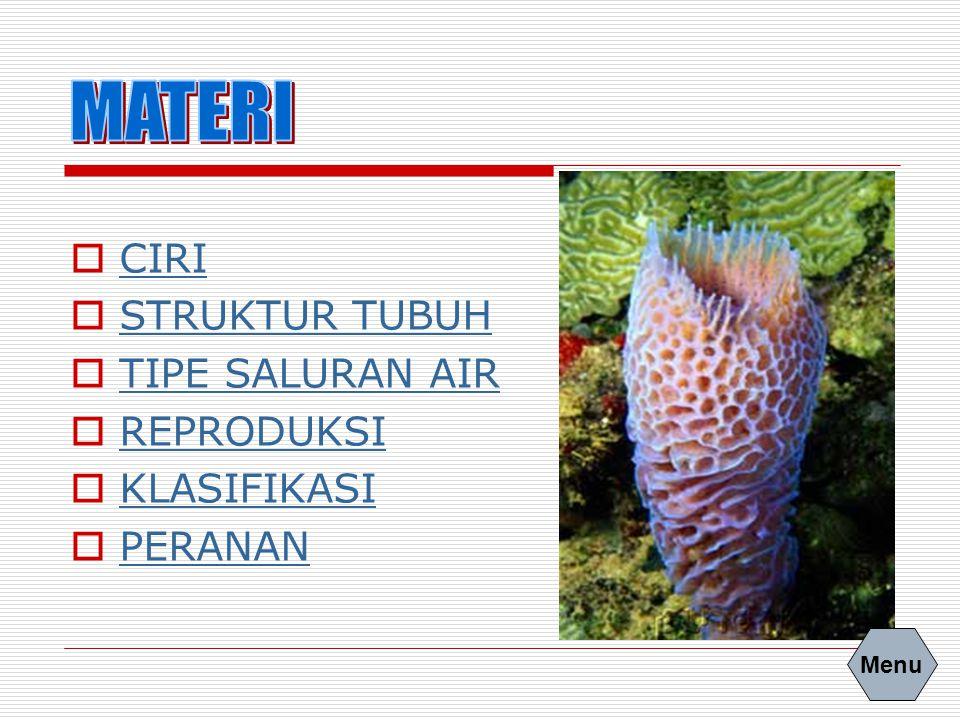   Hidup di air tawar, dan umum di laut   Bentuk tubuh seperti jambangan bunga   Tubuh simetri radial dan asimetri.