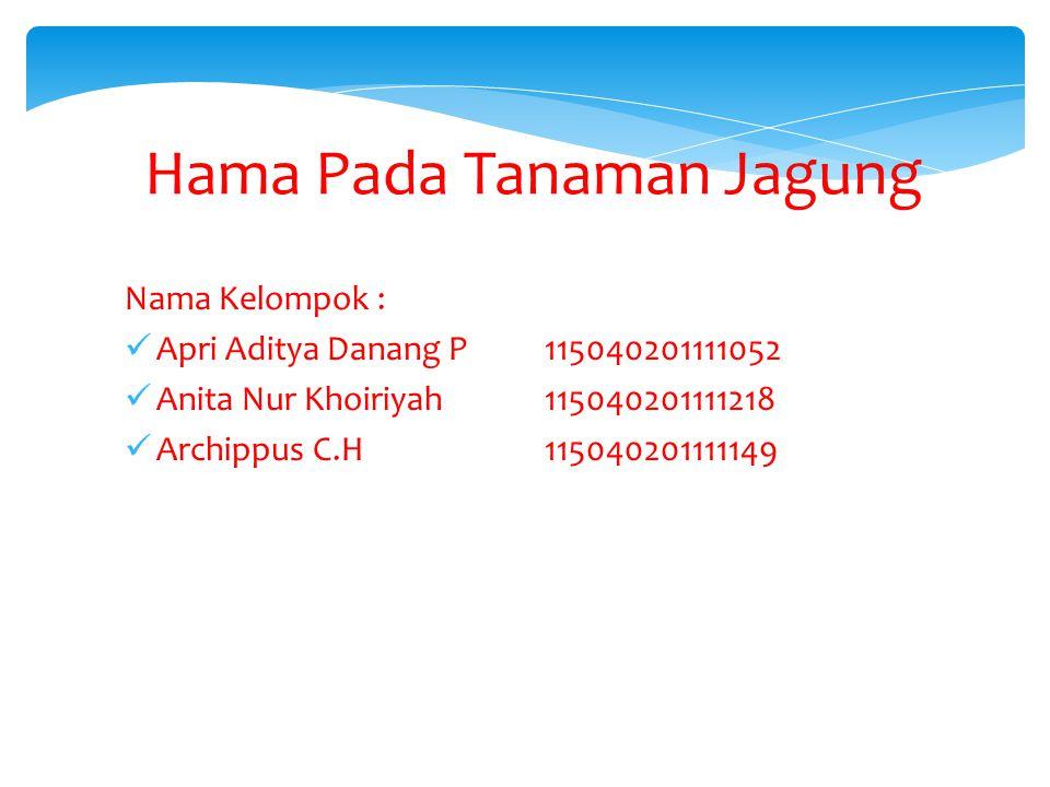 Hama Pada Tanaman Jagung Nama Kelompok : Apri Aditya Danang P115040201111052 Anita Nur Khoiriyah115040201111218 Archippus C.H115040201111149