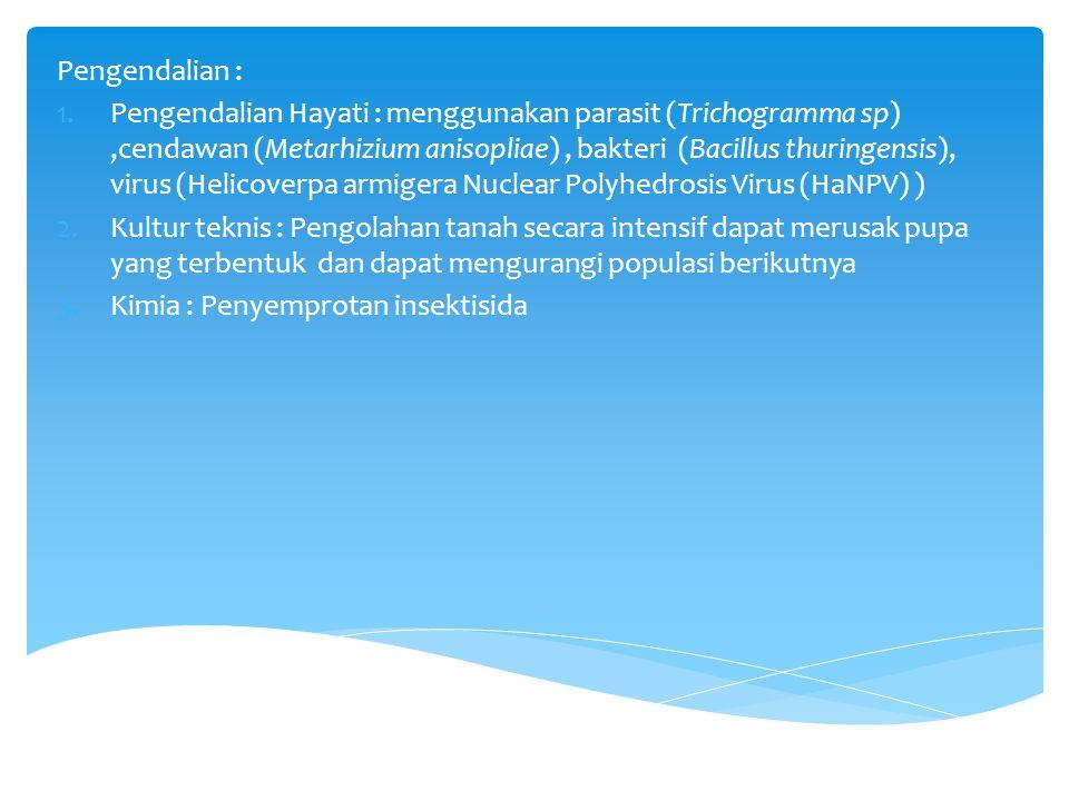 Pengendalian : 1.Pengendalian Hayati : menggunakan parasit (Trichogramma sp),cendawan (Metarhizium anisopliae), bakteri (Bacillus thuringensis), virus