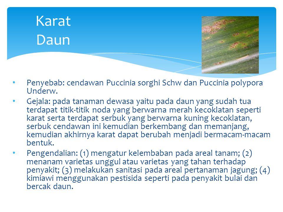 Karat Daun Penyebab: cendawan Puccinia sorghi Schw dan Puccinia polypora Underw. Gejala: pada tanaman dewasa yaitu pada daun yang sudah tua terdapat t