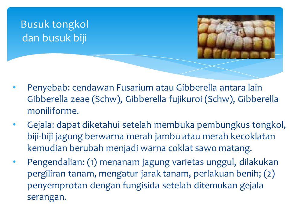 Busuk tongkol dan busuk biji Penyebab: cendawan Fusarium atau Gibberella antara lain Gibberella zeae (Schw), Gibberella fujikuroi (Schw), Gibberella m