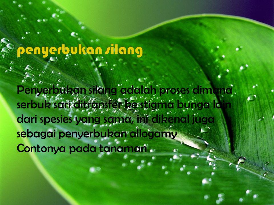 penyerbukan sendiri Penyerbukan sendiri adalah proses dimana serbuk sari ditransfer ke stigma bunga yang sama, contohnya pada tanaman jagung.