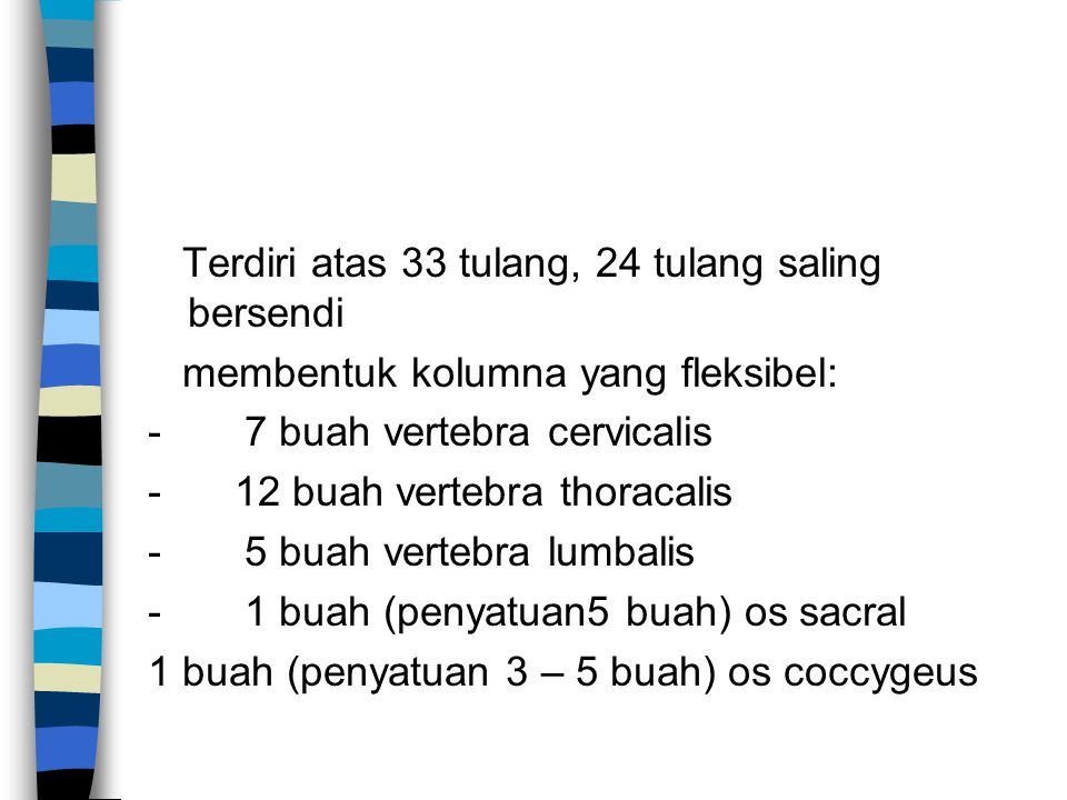 Terdiri atas 33 tulang, 24 tulang saling bersendi membentuk kolumna yang fleksibel: - 7 buah vertebra cervicalis - 12 buah vertebra thoracalis - 5 bua