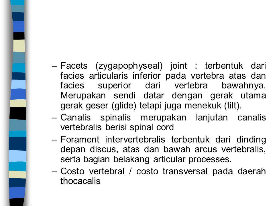 –Facets (zygapophyseal) joint : terbentuk dari facies articularis inferior pada vertebra atas dan facies superior dari vertebra bawahnya. Merupakan se