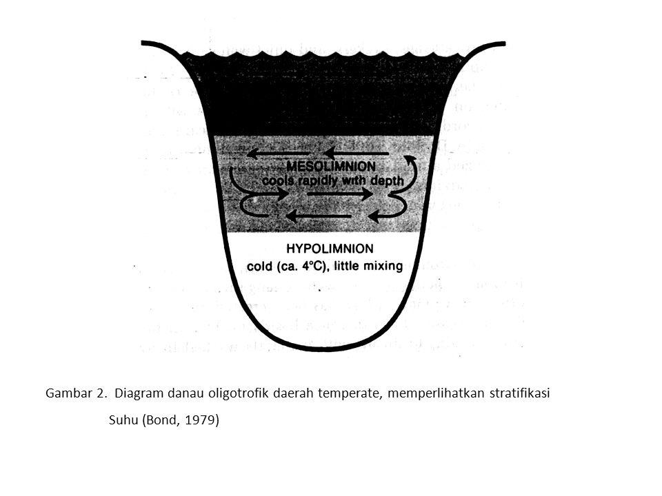 Gambar 2. Diagram danau oligotrofik daerah temperate, memperlihatkan stratifikasi Suhu (Bond, 1979)