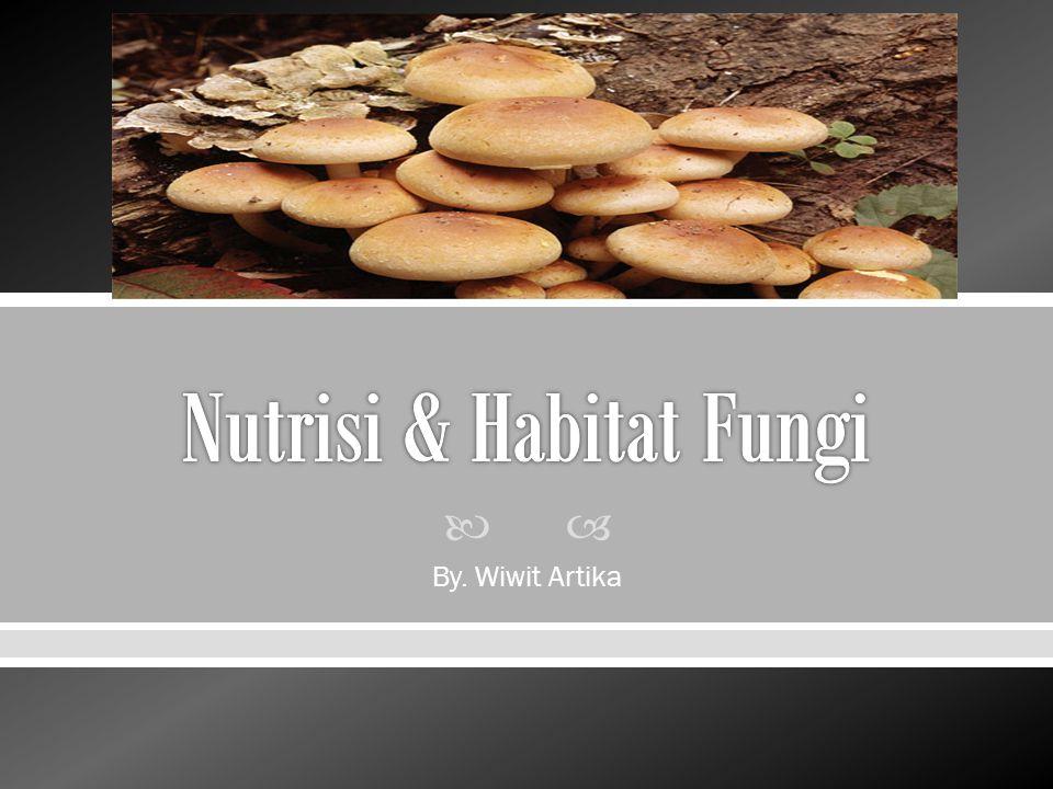  Fungi sangat beragam dan terdapat hampir diseluruh tempat  Fungi penting bagi kesejahteraan ekosistem darat paling karena mereka memecah bahan organik dan mendaur ulang nutrisi penting  Fungi merupakan heterotrof sehingga memperoleh nutrisinya dengan pencernaan diluar tubuh (external digestion)